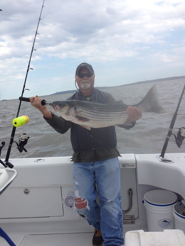 Nj salt fish 2014 05 05 bill chaser sandy hook for Fishing charters nj