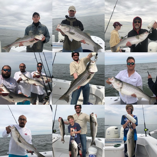 Striped Bass Fishing Trips